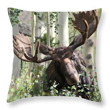 Big Daddy The Moose 3 Throw Pillow