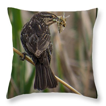 Big Dinner For Female Red Winged Blackbird II Throw Pillow by Patti Deters