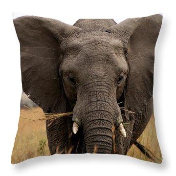 Big Gray Throw Pillow by Debi Demetrion