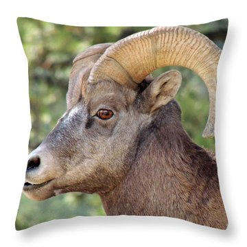 Throw Pillow featuring the photograph Big Horn by Lynn Sprowl