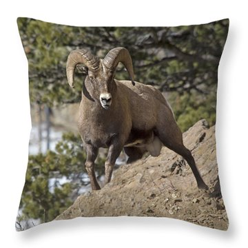 Big Horn Ram Throw Pillow