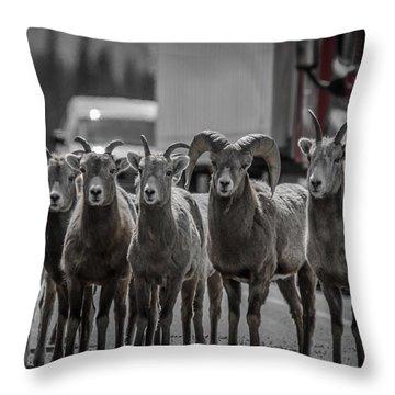 Big Horn Sheep Road Block Throw Pillow