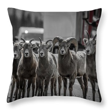 Big Horn Sheep Road Block Throw Pillow