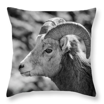Big Horn Sheep Profile Throw Pillow