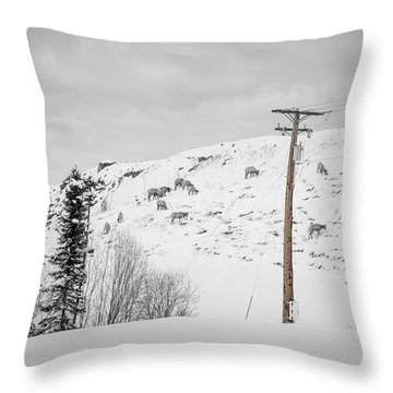 Big Horn Sheep Hinton Hillside Throw Pillow