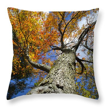 Big Orange Maple Tree Throw Pillow by Christina Rollo
