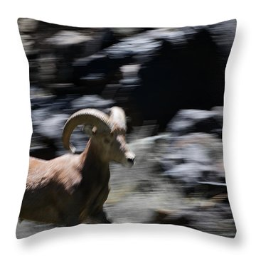 Bighorn Blur Throw Pillow by Britt Runyon