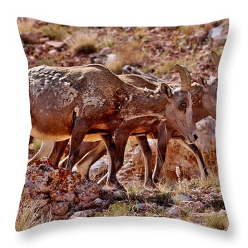 Throw Pillow featuring the photograph Bighorn Canyon Sheep Trio by Janice Rae Pariza