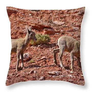 Throw Pillow featuring the photograph Bighorn Canyon Sheep Wyoming by Janice Rae Pariza