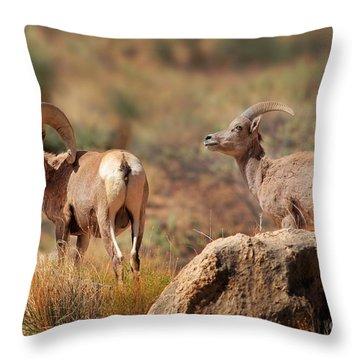Bighorn Duo Throw Pillow