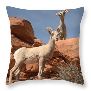 Bighorn Ewes Throw Pillow