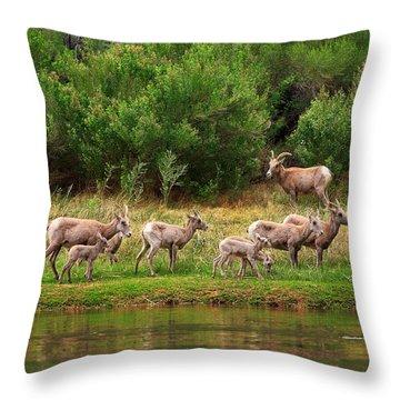 Bighorn Herd Throw Pillow
