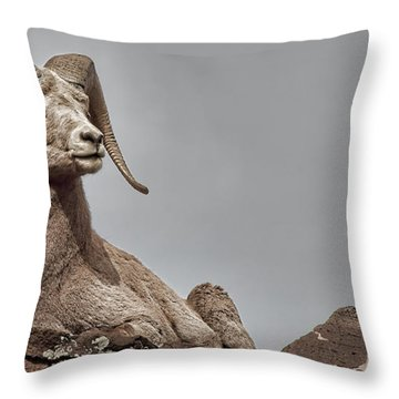 Bighorn Ram Regard Throw Pillow by Britt Runyon
