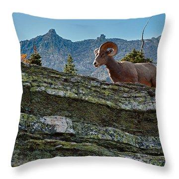 Bighorn Throw Pillow by Sebastian Musial
