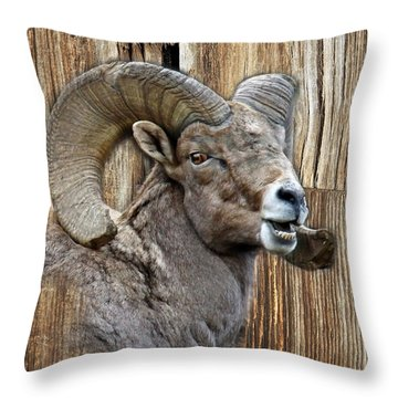 Bighorn Sheep Barnwood Throw Pillow by Steve McKinzie