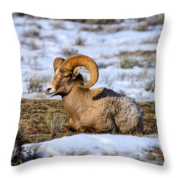 Throw Pillow featuring the photograph Bighorn Sheep by Greg Norrell