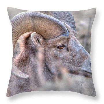 Bighorn Soft Throw Pillow by Britt Runyon