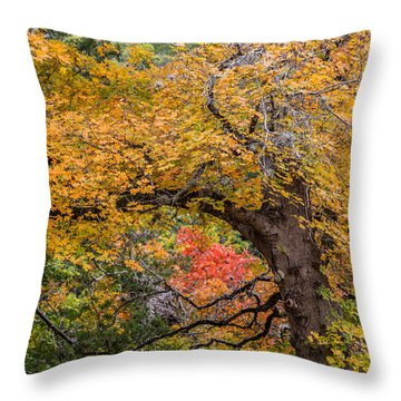 Bigtooth Maples Turning Colors Throw Pillow