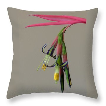 Bilbergia Nutans Study Throw Pillow