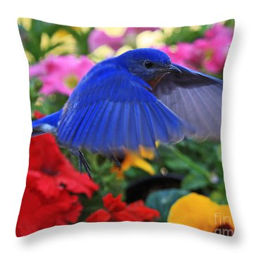 Billy Bluebird Landing Throw Pillow