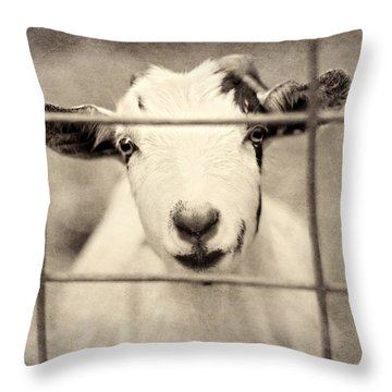 Billy G Throw Pillow by Amy Tyler
