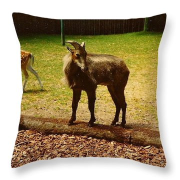 Billy Goat Keeping Lookout Throw Pillow by Amazing Photographs AKA Christian Wilson
