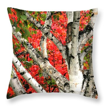 Throw Pillow featuring the photograph Birch Eclipsing Maple by Doris Potter