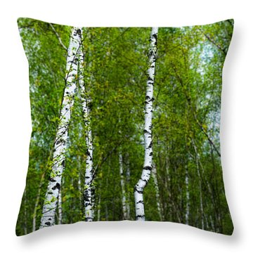 Birch Forest Throw Pillow by Hannes Cmarits