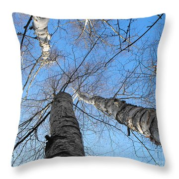 Birch Group In Winter Throw Pillow