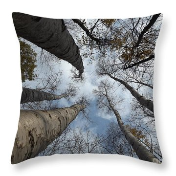 Birch Grouping Throw Pillow by Erick Schmidt