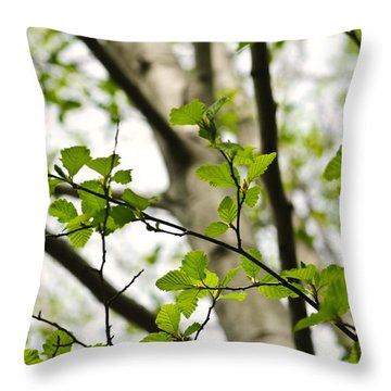 Birch Tree In Spring Throw Pillow by Elena Elisseeva