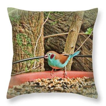 Bird And Feeder Throw Pillow by Joan  Minchak