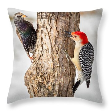 Bird Feeder Stand Off Throw Pillow by Bill Wakeley
