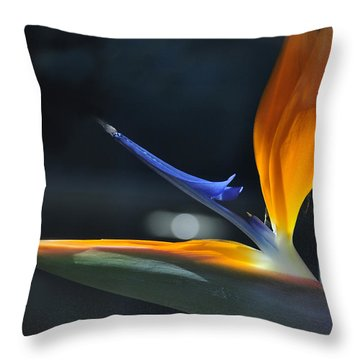 Bird In The Window Throw Pillow