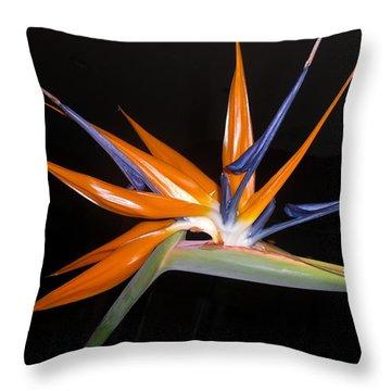 Bird Of Paradise Beauty 4 Throw Pillow