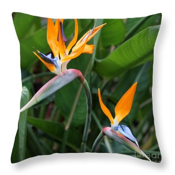 Bird Of Paradise Throw Pillow by Carol Groenen