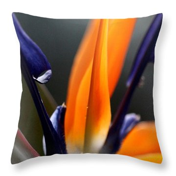 Bird Of Paradise - Crane Flower Throw Pillow by Ramabhadran Thirupattur