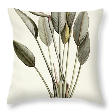 Bird Of Paradise Throw Pillow by Pierre Joseph Redoute