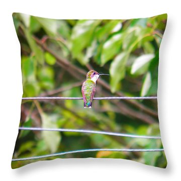 Throw Pillow featuring the photograph Bird On A Wire by Nick Kirby