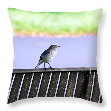 Bird On Bench Throw Pillow by Aimee L Maher Photography and Art Visit ALMGallerydotcom