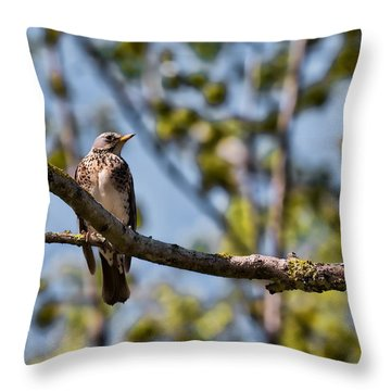 Throw Pillow featuring the photograph Bird Sitting On Brach by Leif Sohlman