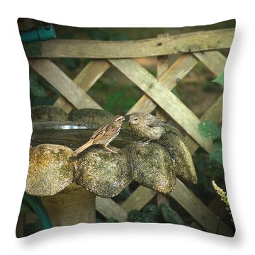Birdbath Rendezvous Throw Pillow