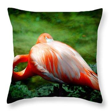 Bird's Eye View Throw Pillow