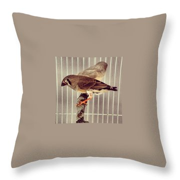 Animals Throw Pillows