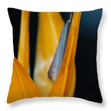 Birds Of Paradise Throw Pillow by Matt Harang