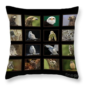 Birds Of Prey Of Canada Throw Pillow by Inspired Nature Photography Fine Art Photography