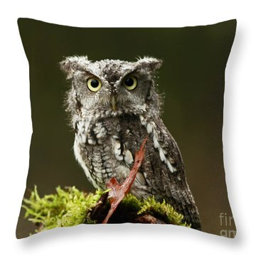 Birds Of Prey Photography Workshop  Feb. 23 2013 Eastern Screech Owl  Throw Pillow by Inspired Nature Photography Fine Art Photography