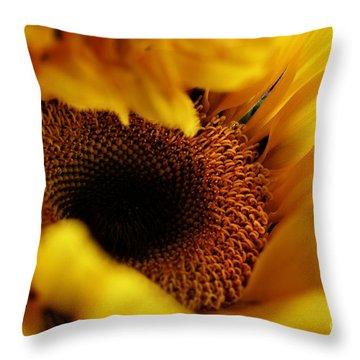Birth Of A Sunflower Throw Pillow by Stephanie Frey