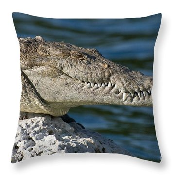 Biscayne National Park Florida American Crocodile Throw Pillow by Paul Fearn