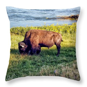 Throw Pillow featuring the photograph Bison 4 by Dawn Eshelman